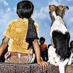 Movies for Animal Lovers