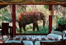 Photo of Top 4 South African Luxury Safari Lodges