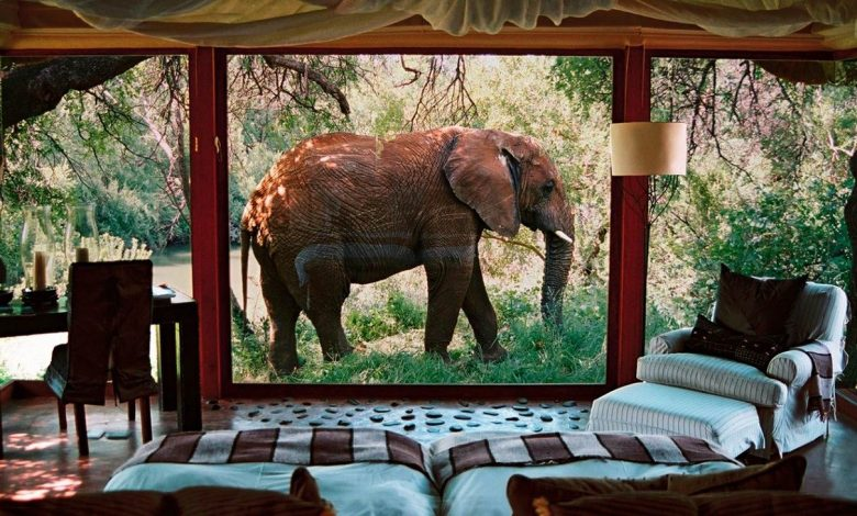 South African Luxury Safari Lodges